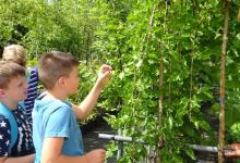 vrtnarija_ospp17