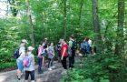 Dan dejavnosti – pohod na Magdalensko goro